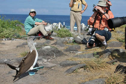 Blue-footed Booby Photo @ Kiwifoto.com