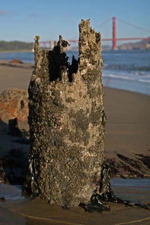Golden Gate Pier Stump