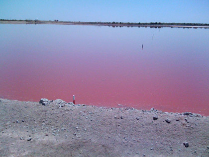 Blood Red Pond